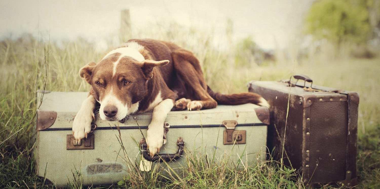 cane valige pacchetti turistici oltrepo