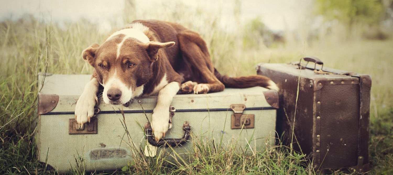 cane turista pacchetti turistici oltrepo pavese