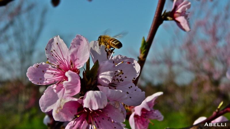 natura fiori ape oltrepo pavese