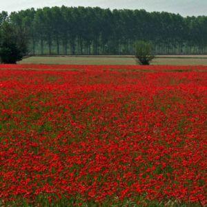 campo fiori rossi oltrepo pavese